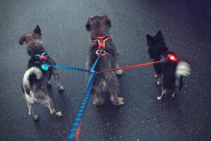 Psi na vodítku Dareen